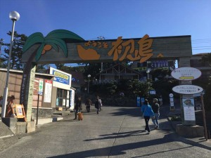 hatusima11